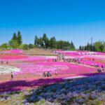 羊山公園芝桜2020年「料金・時間・アクセス」見頃はいつ?